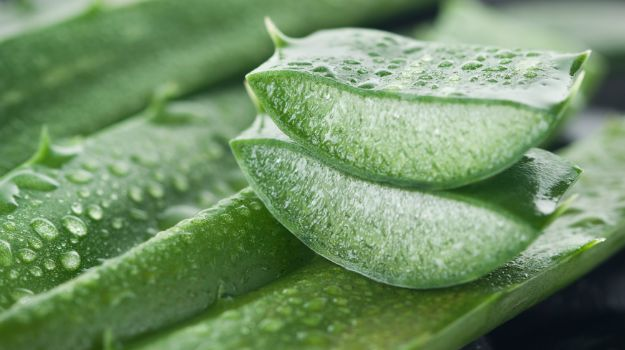 Aloe Vera's natural properties might help